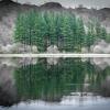 Conifer Reflection