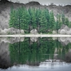 Conifer Reflection