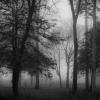 Mist Great Tew
